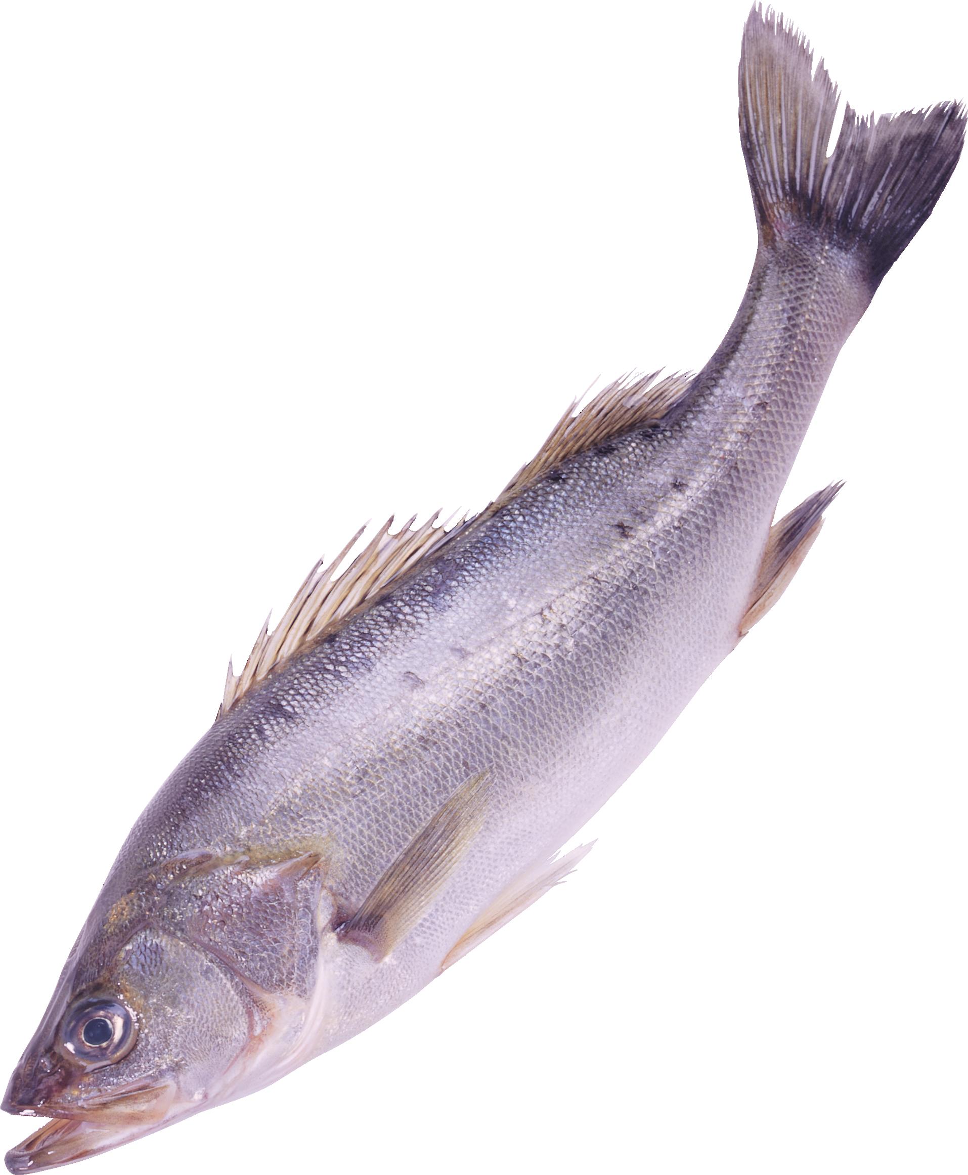 Best  Fish Crafts