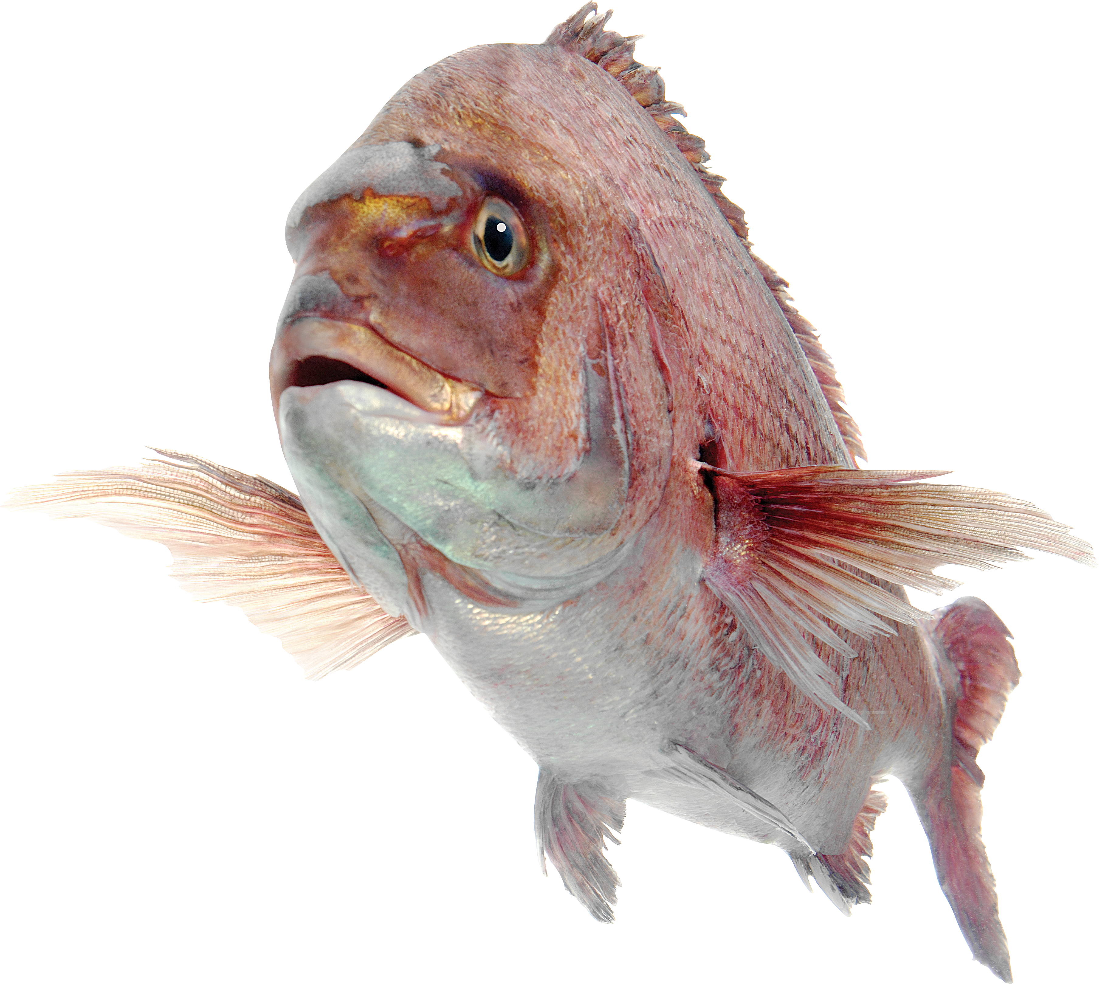 Fish png image free download for Where to fish