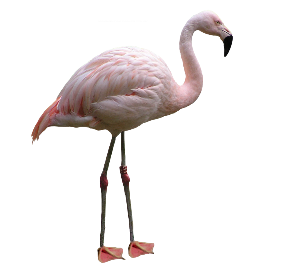 Where Is Flamingo Beach Florida