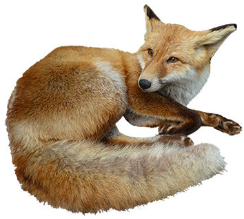 Fox png images free download pictures - Clipart renard ...
