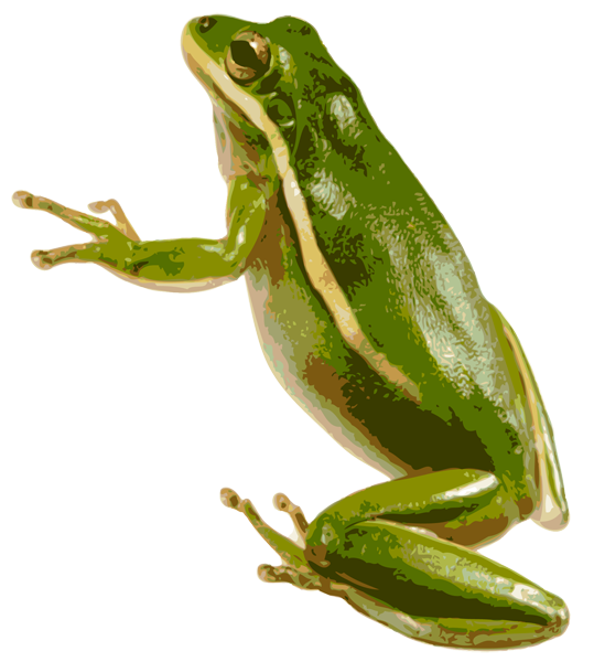 green frog png ice clipart png ice clip art black