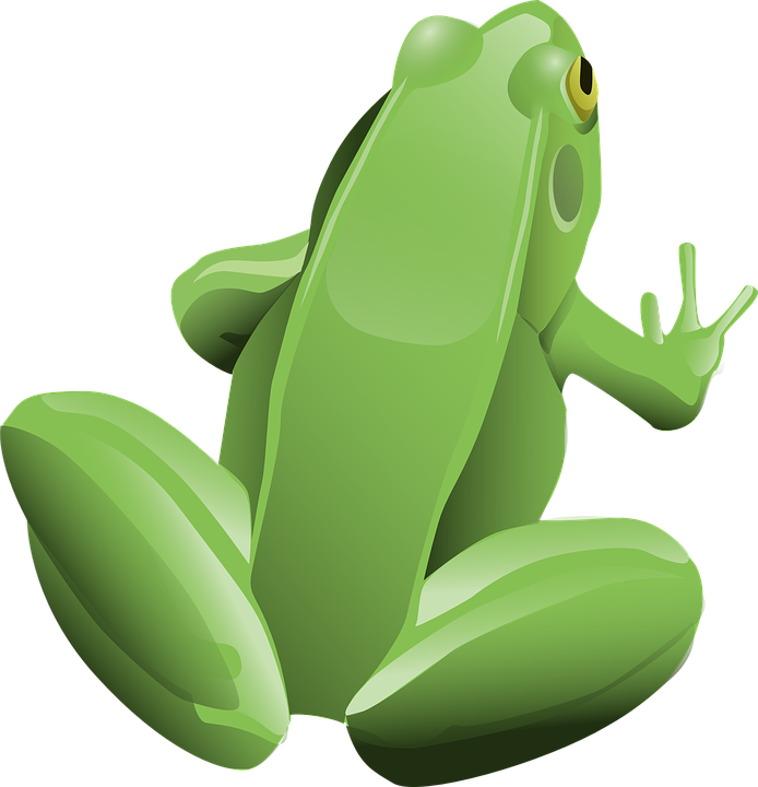 Green frog PNG