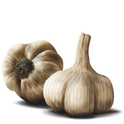 Garlic PNG images free download, garlic PNG