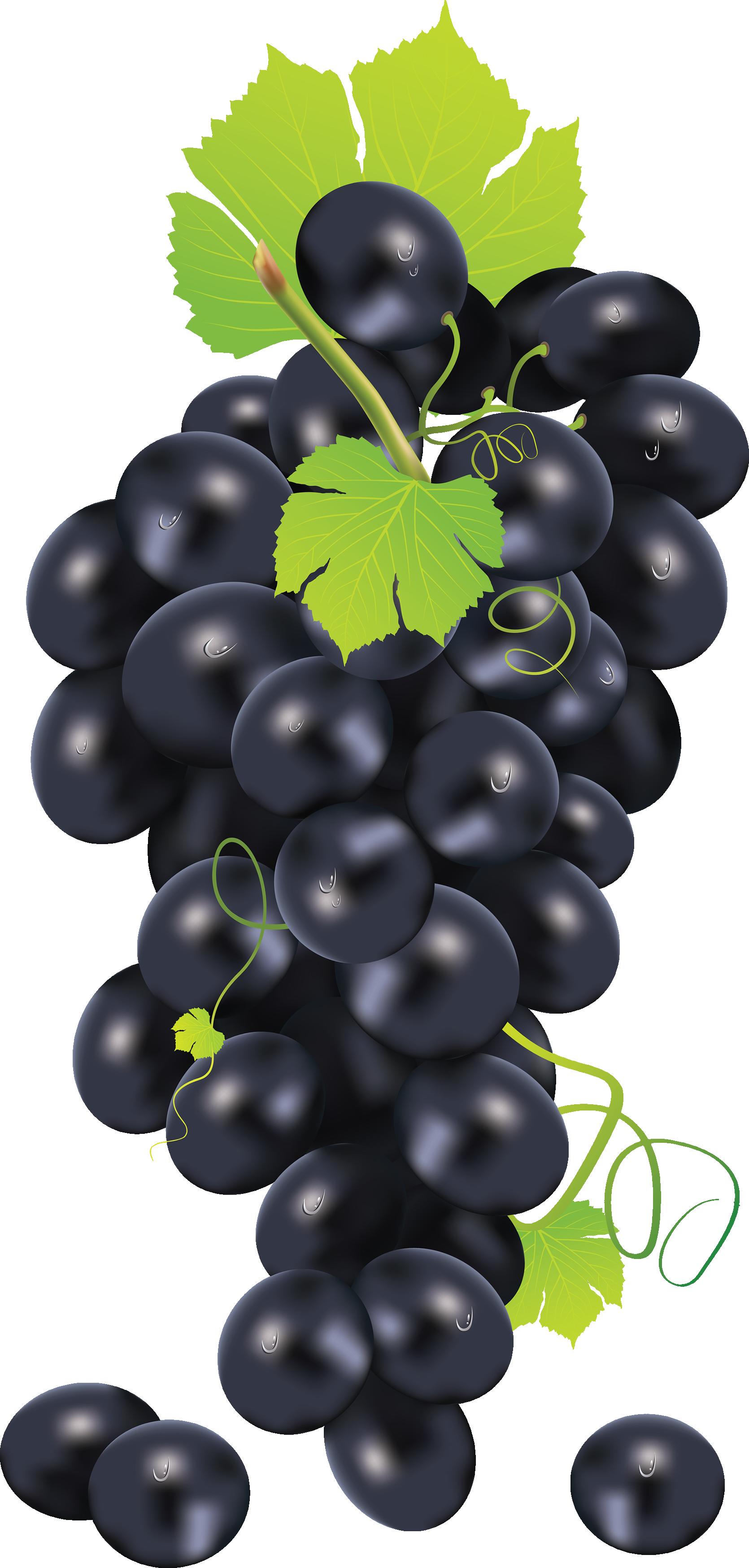 Grape PNG image free Download