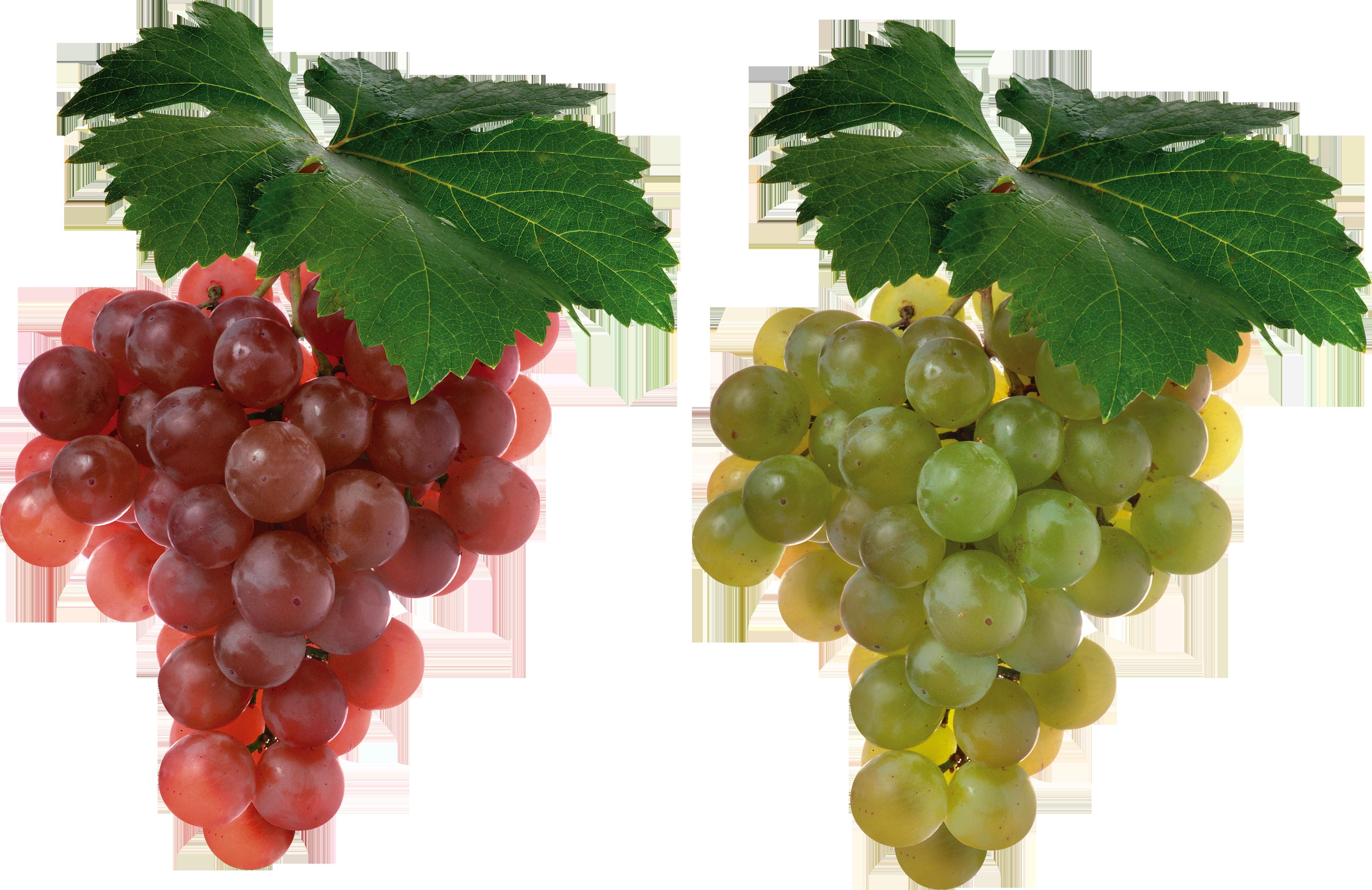 grape PNG2966