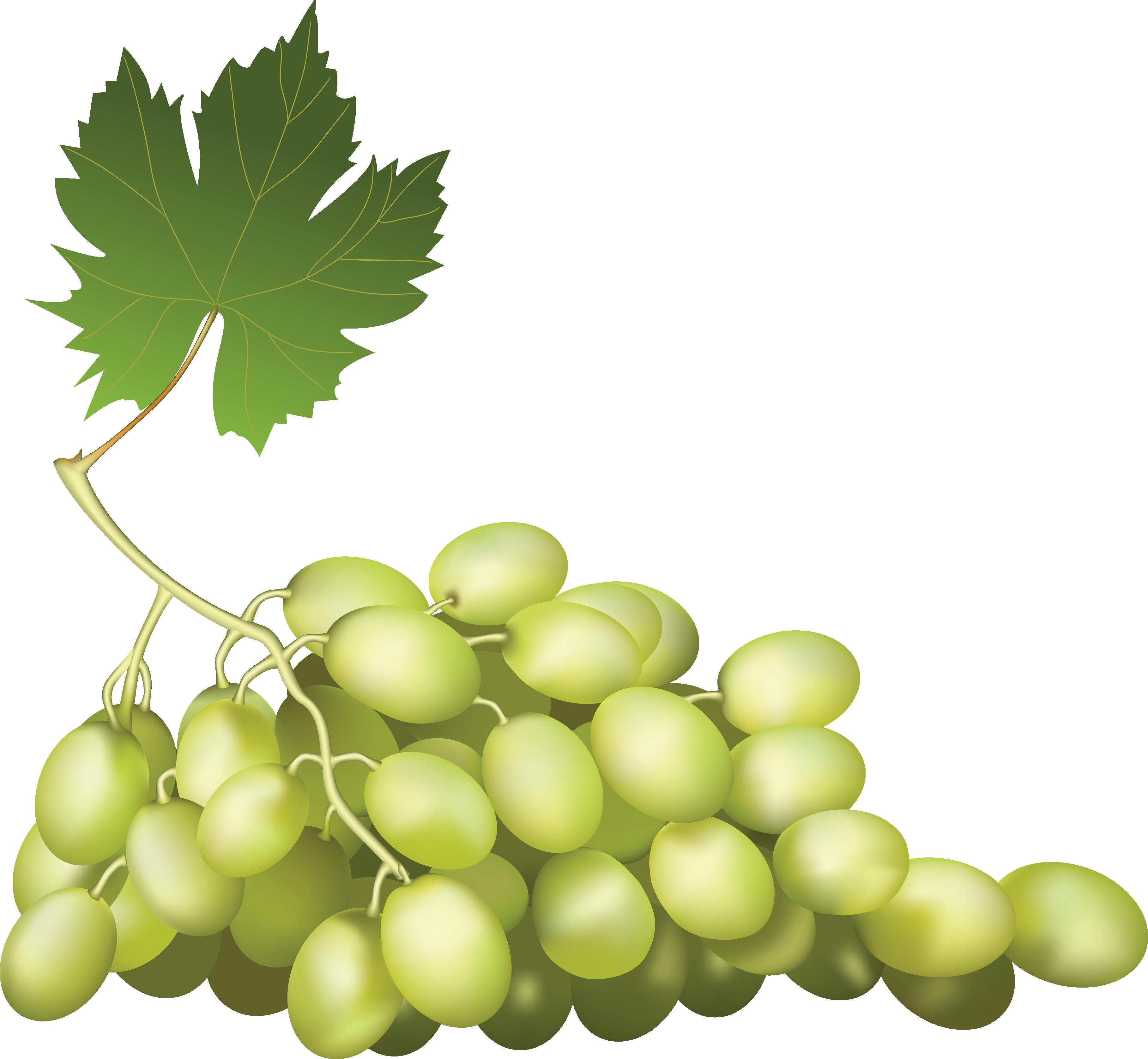 Grape PNG image