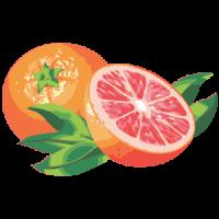 葡萄柚17