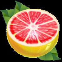 葡萄柚15