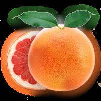 葡萄柚12