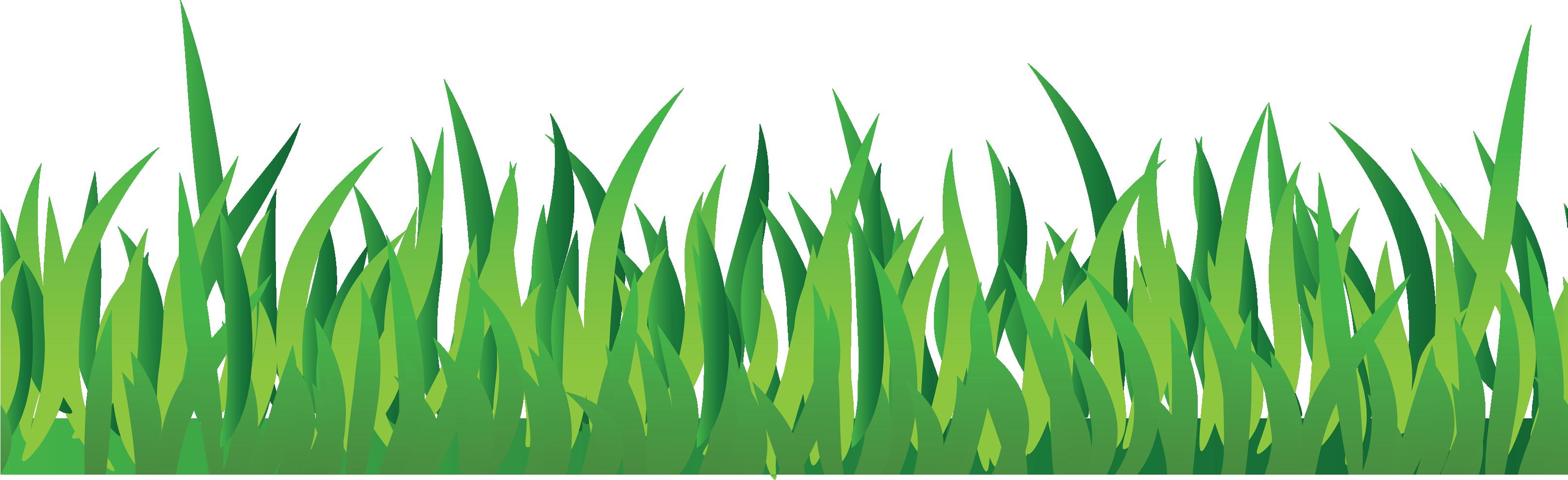 Como cuidar da relva do seu jardim