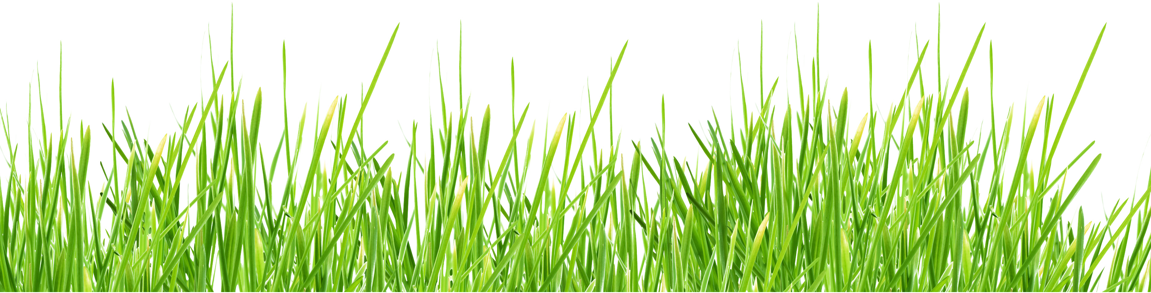 grass png image, green picture