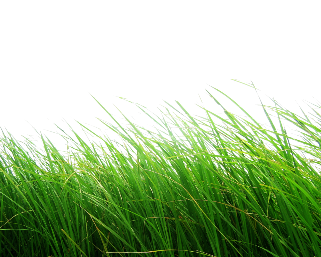 grass png images pictures