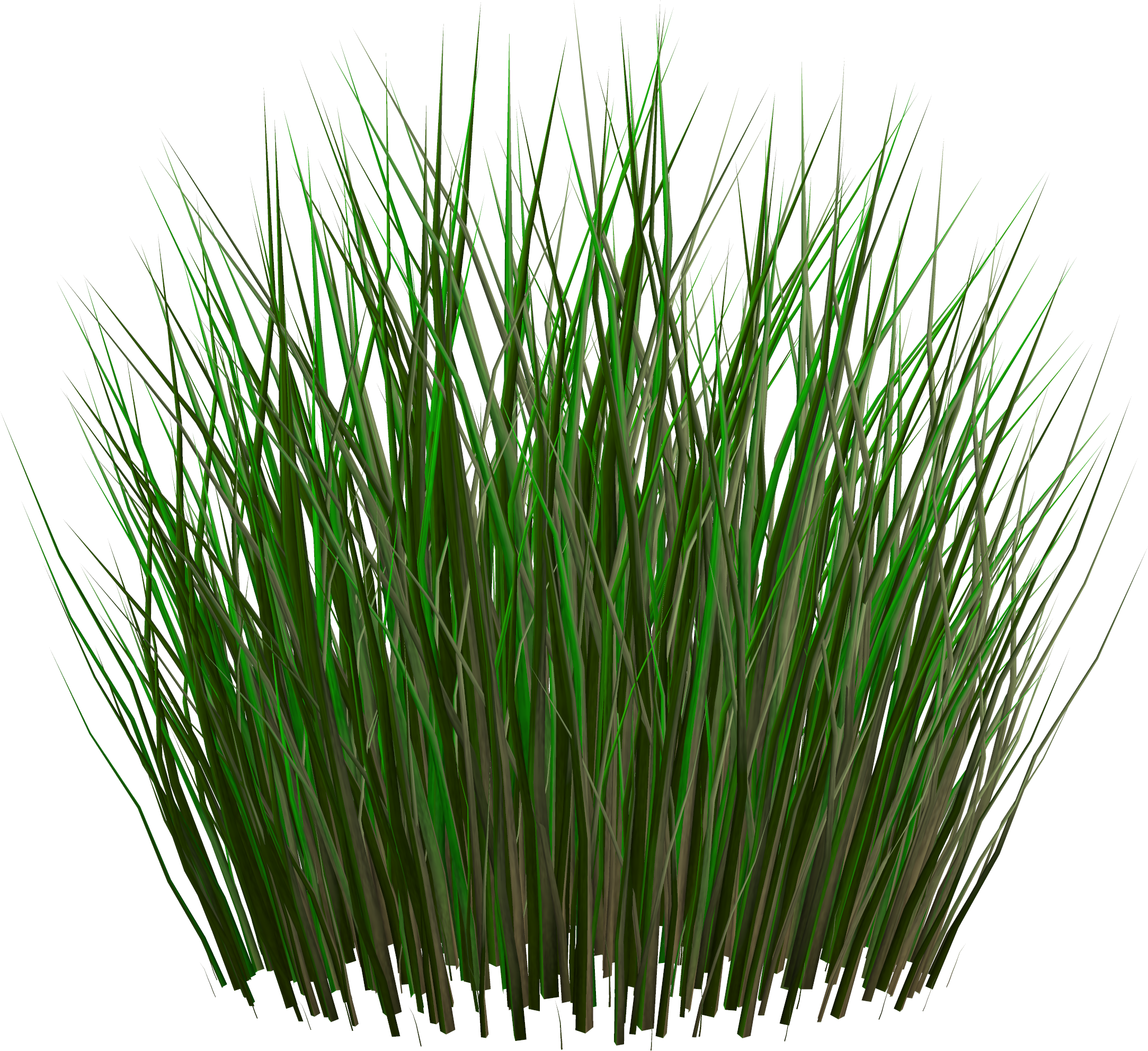 Grass png image green grass png picture Long grass plants