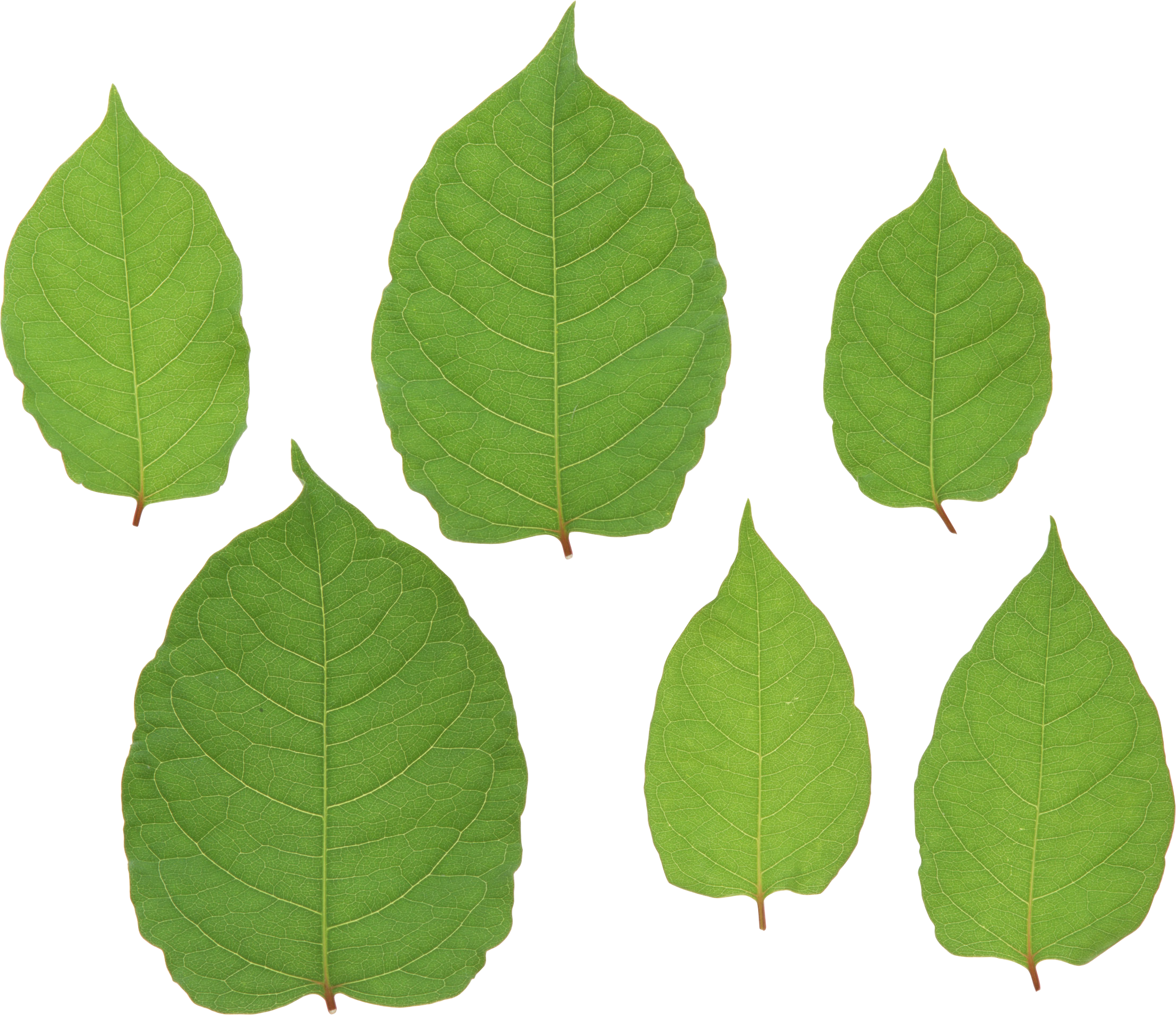 Green leaves PNG images free download pictures