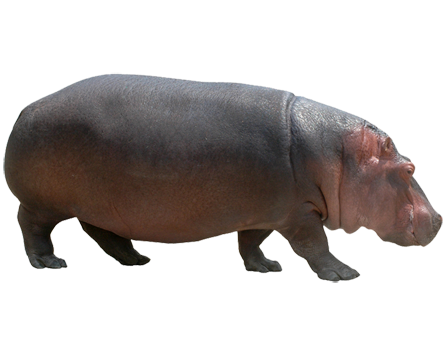 Hippo PNG