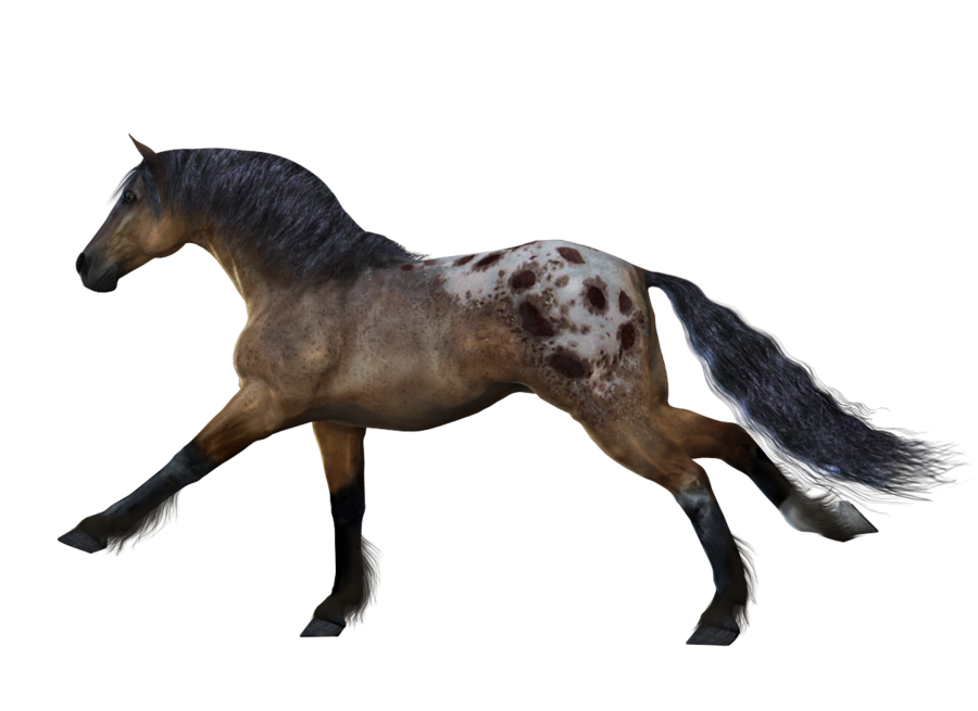 white horse png image, free download picture, transparent background