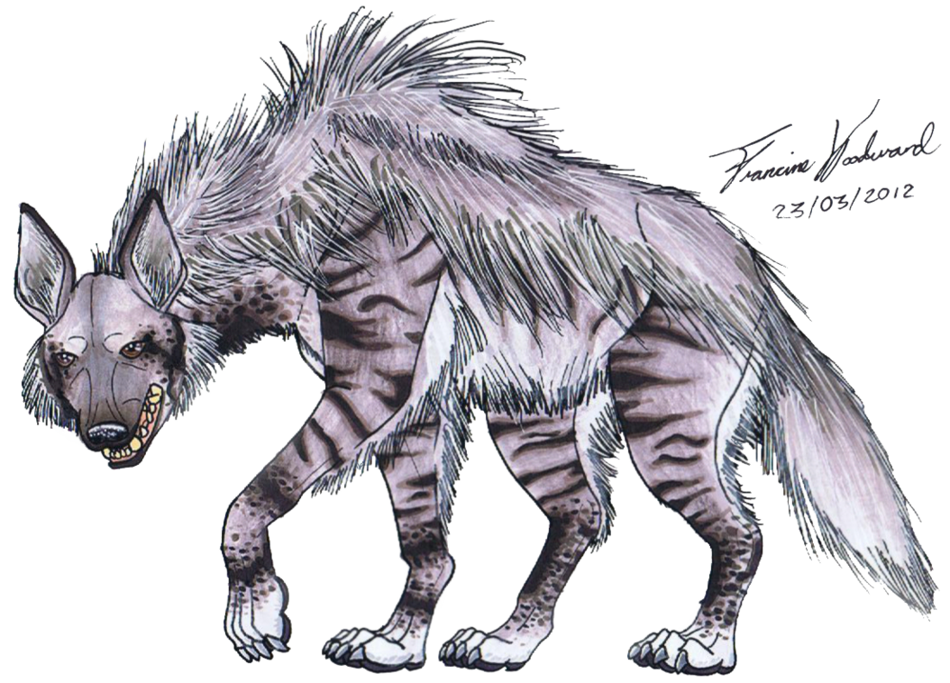 Hyena PNG images