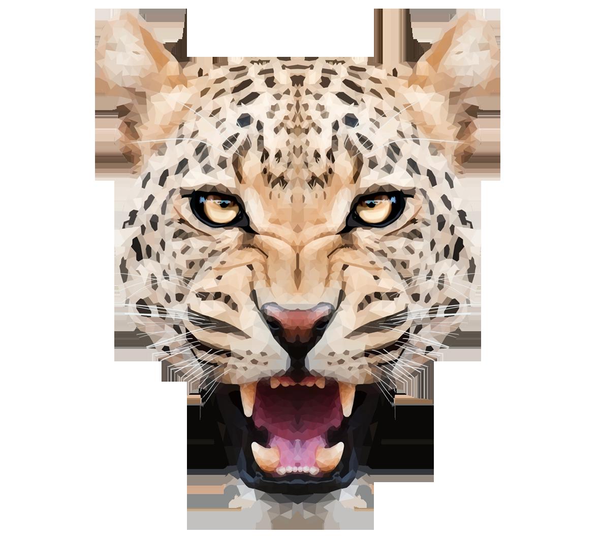 leopard png leopard clip art border leopard clip art logo