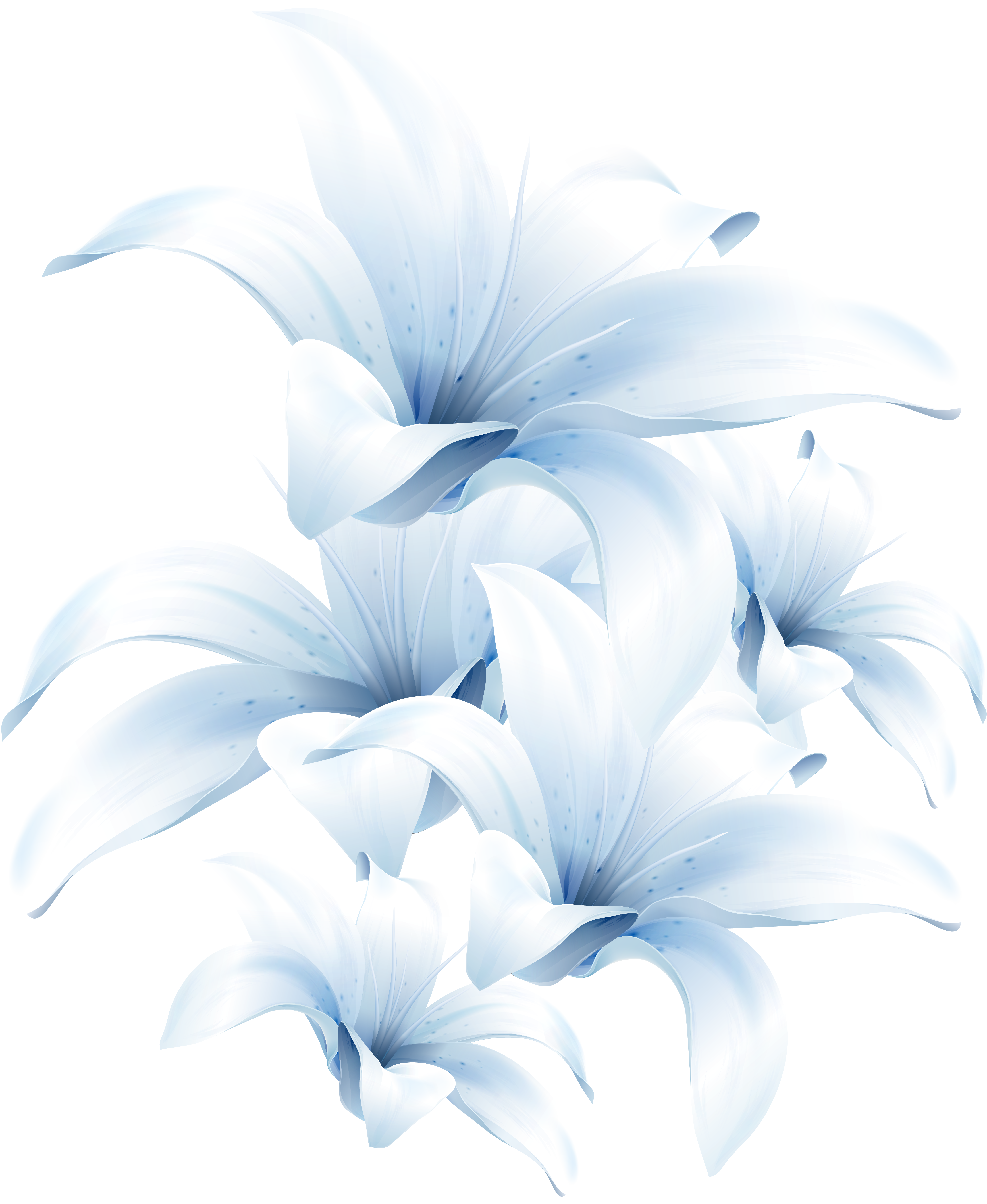 Lilium PNG images Download