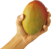 Mango in hand PNG image
