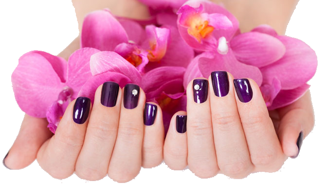 Orchid Nail And Spa Nyc