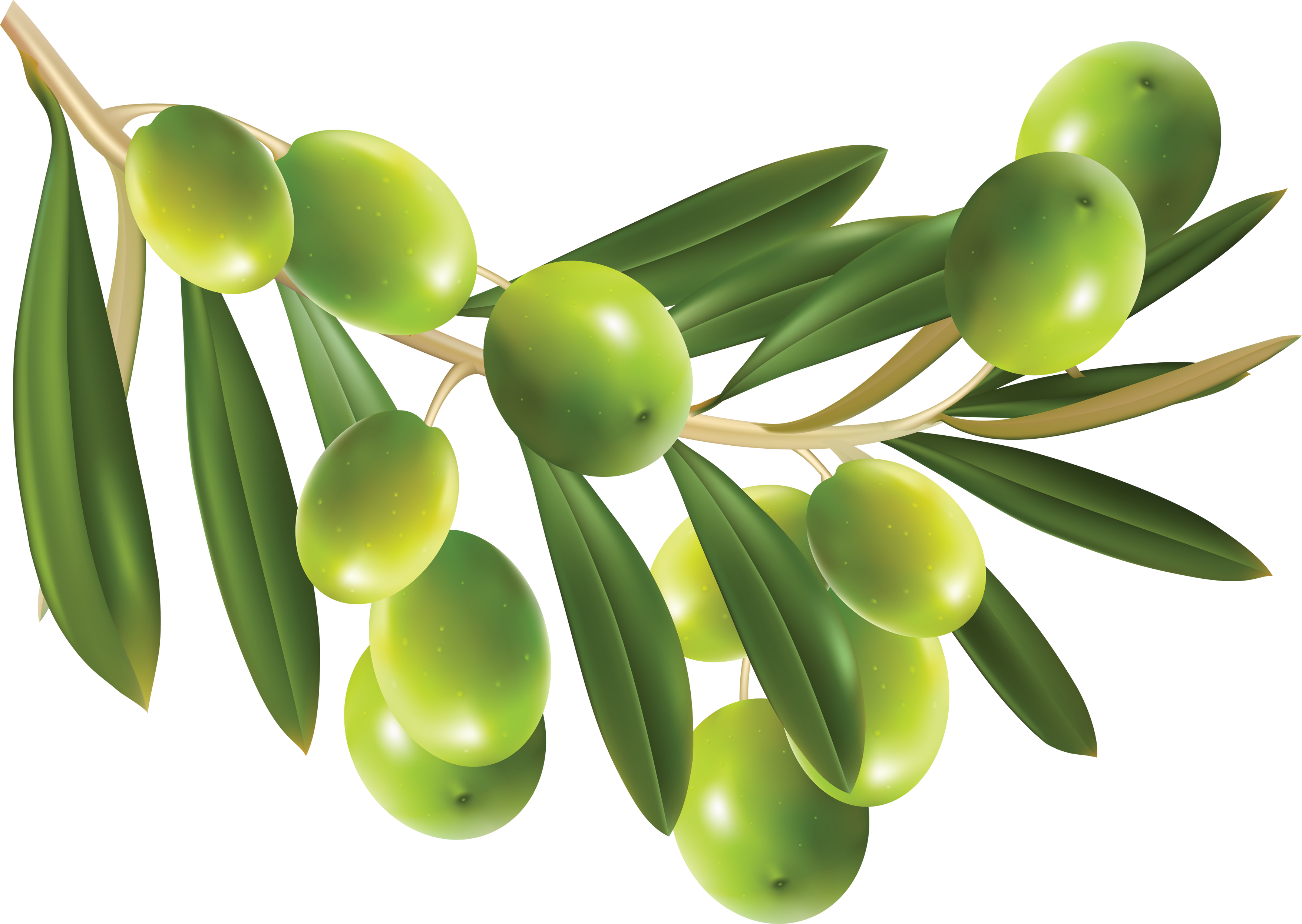 Green olives PNG