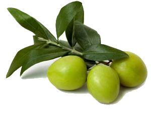 doğal bitkisel naturel zeytinyağı
