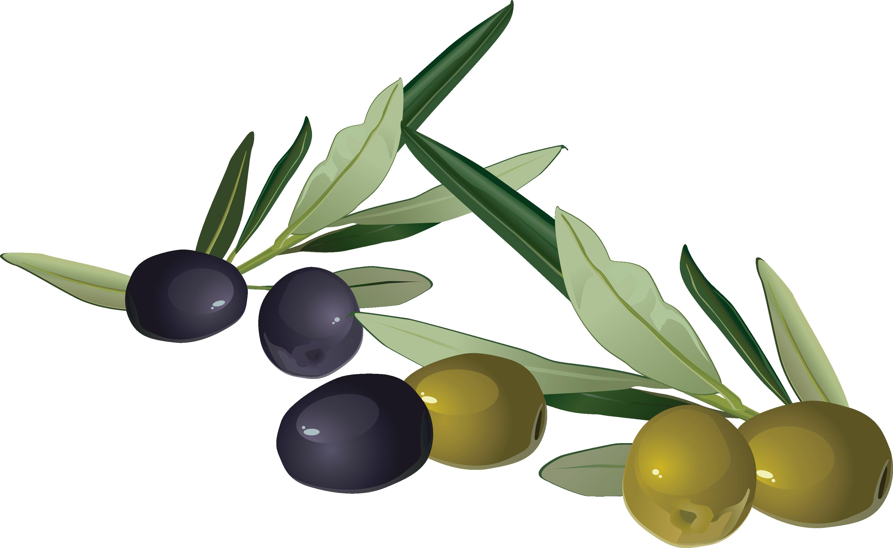 Olive PNG