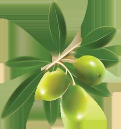 Olives PNG images