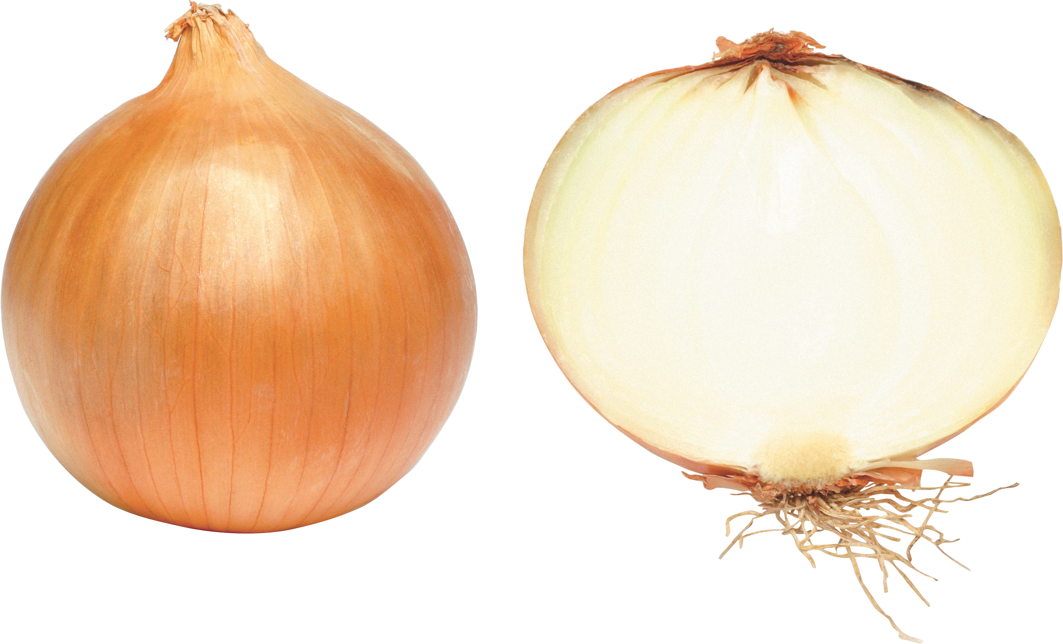 Onion PNG image