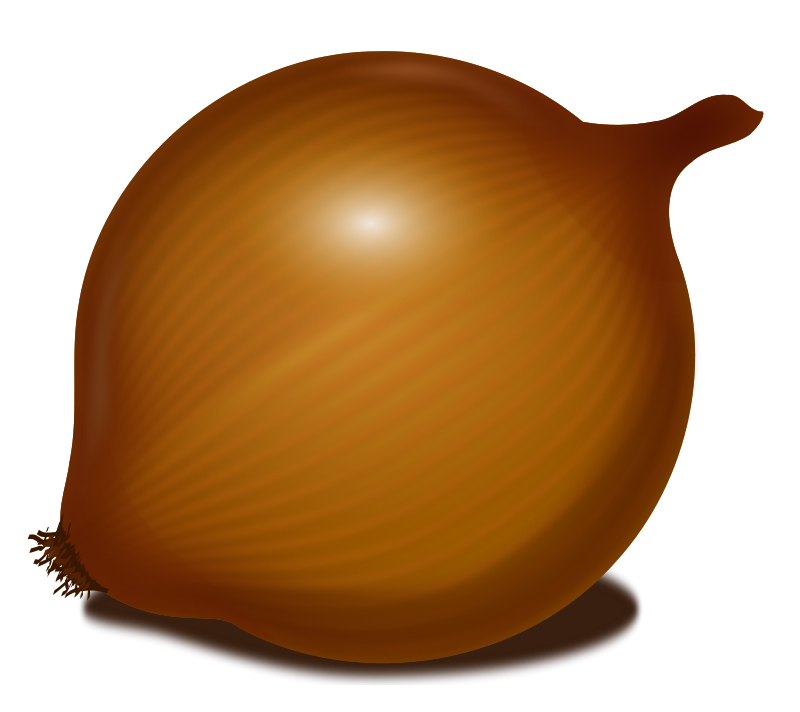 Onion PNG image, free download picture