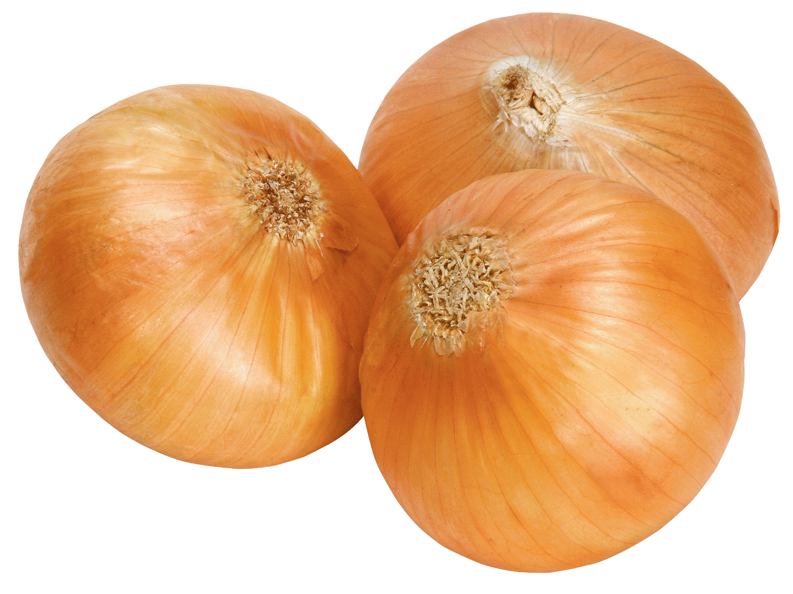 Onion PNG images, free download