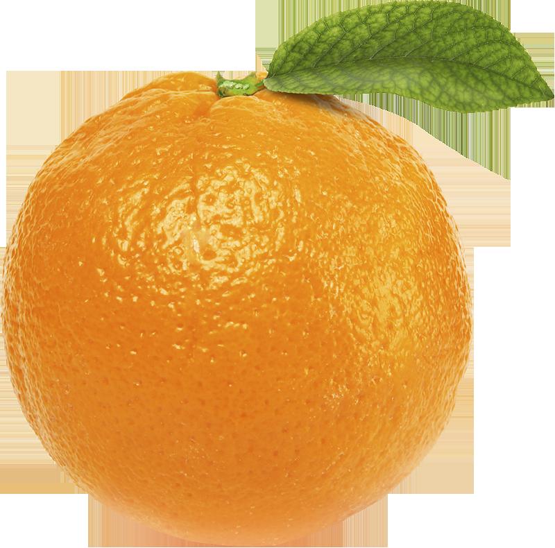 Web Design Orange