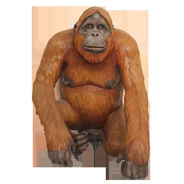 Orangutan PNG images Download