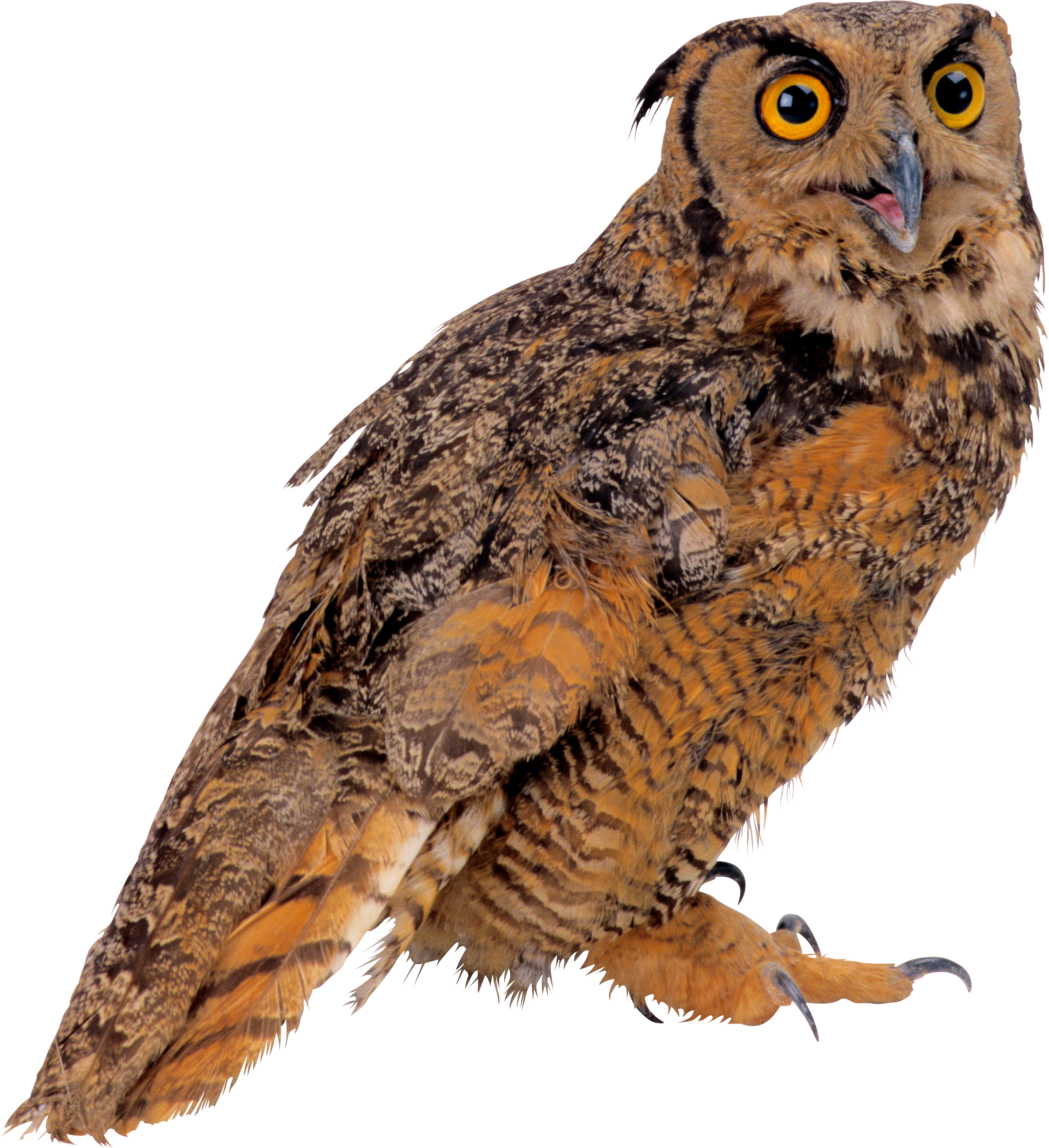 Owl 57 Owls PNG images...