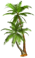 Tropical palm tree PNG