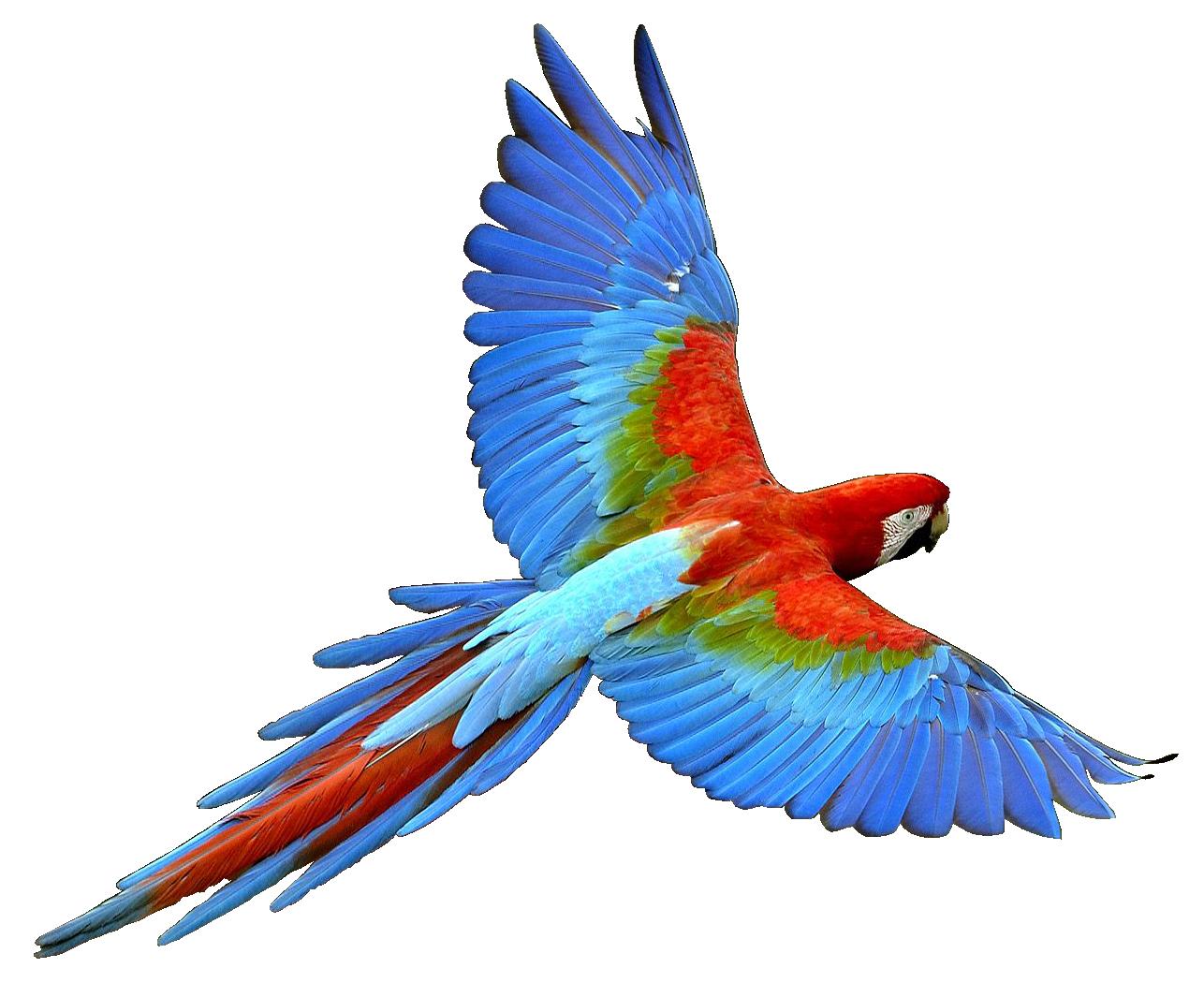 R G Parrott Ltd Parrot PNG images, fre...