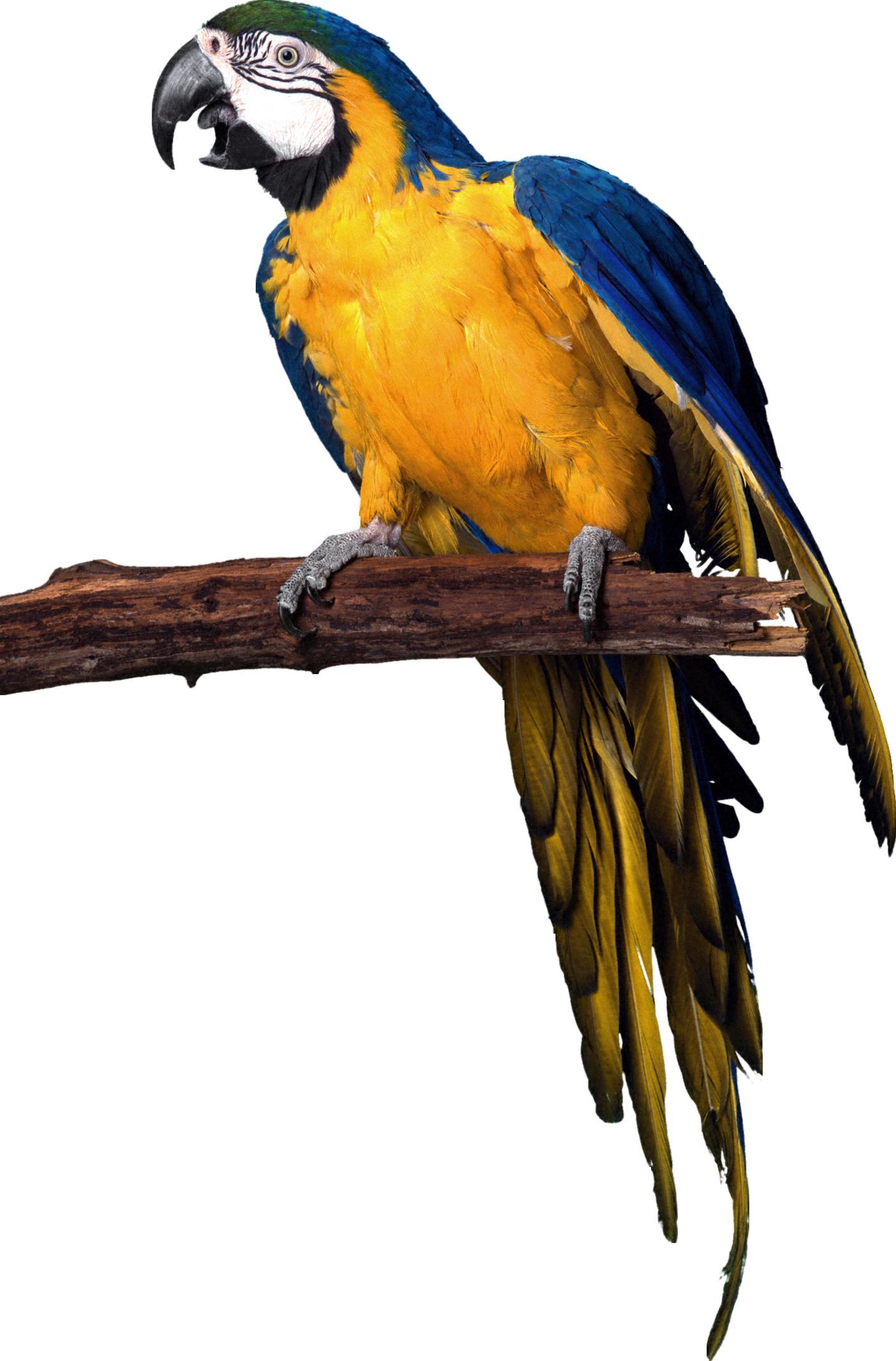 Long Island Exotic Birds