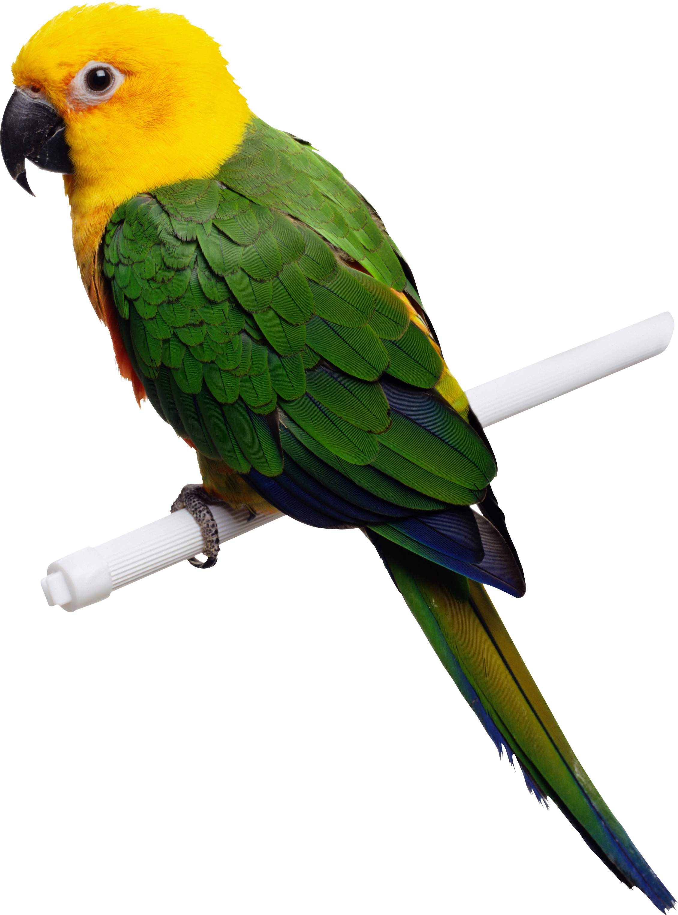 parrot png images  free pictures download fox hunting clipart free deer hunting clipart free