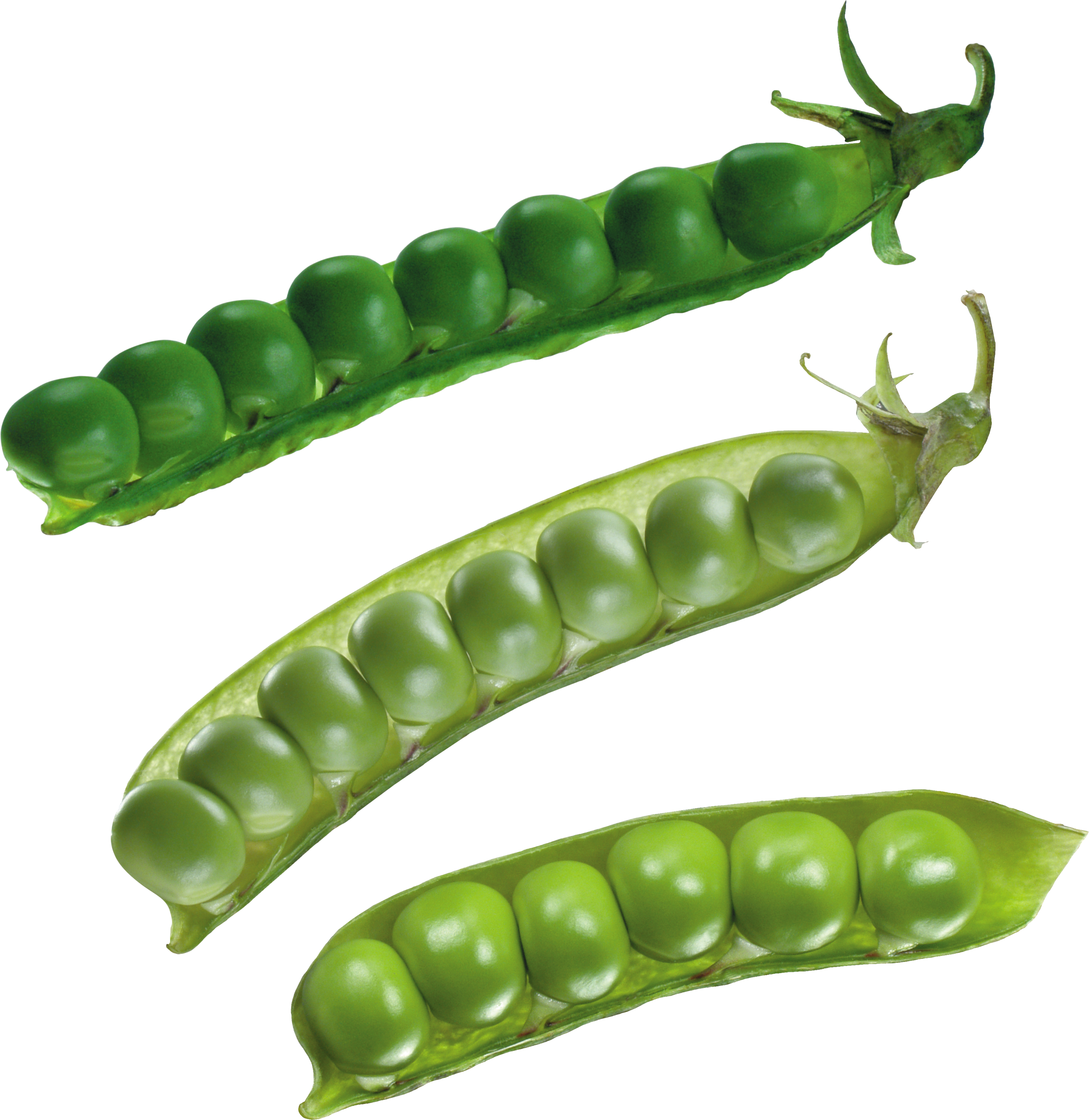 Pea PNG images