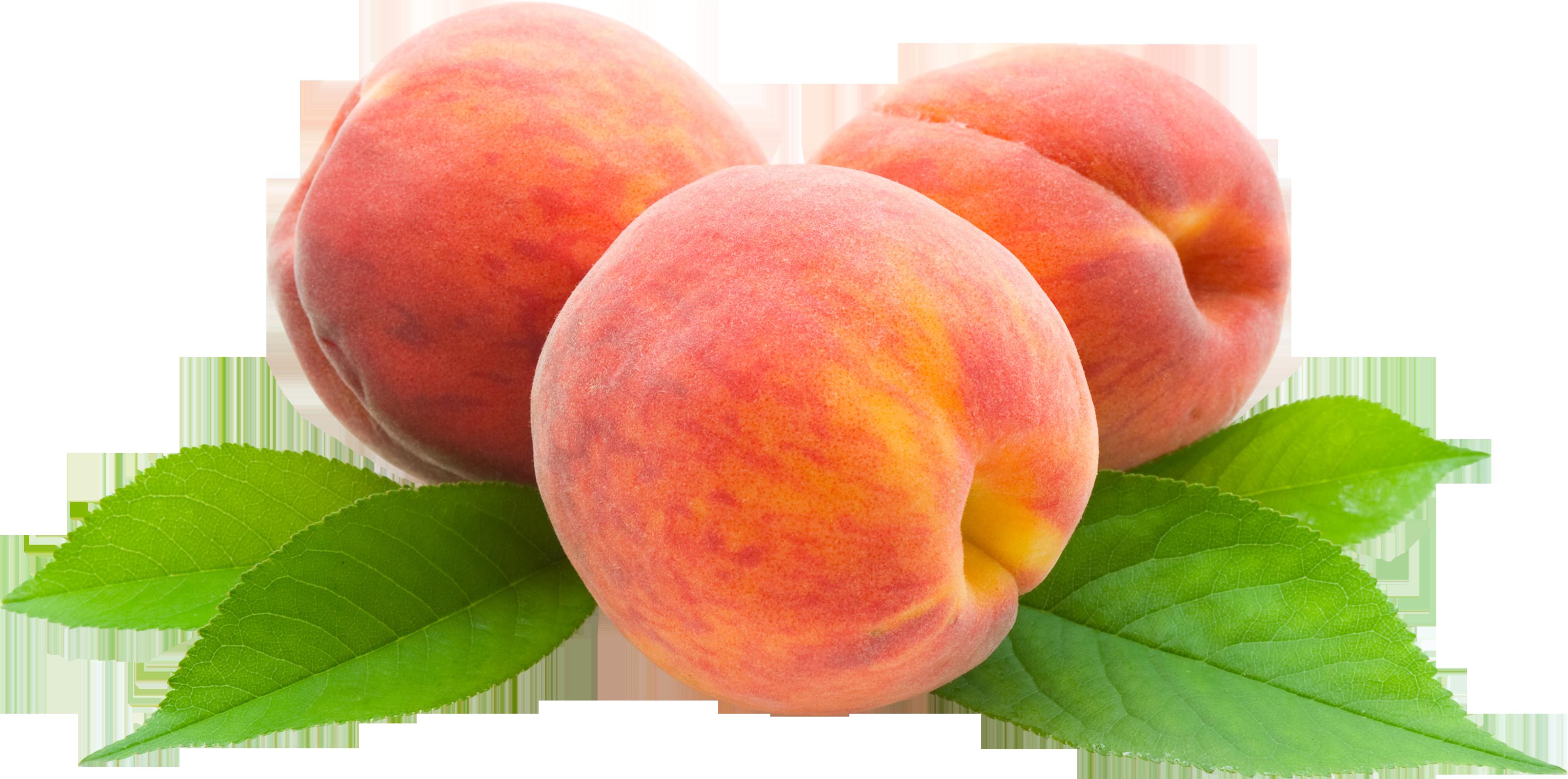 Suncrest Yellow Peach Tree