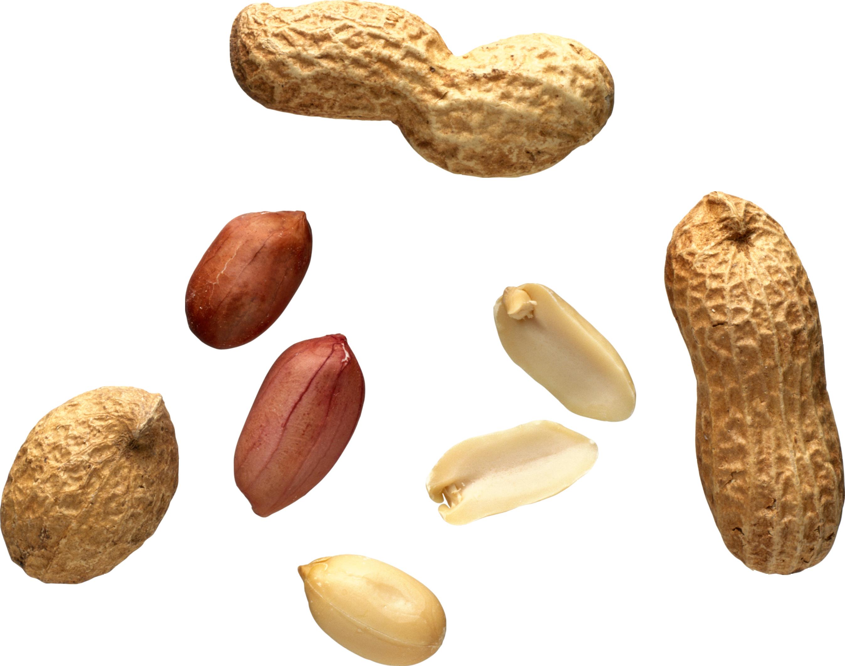 Peanut Allergy Cured In Majority Of Children In Life