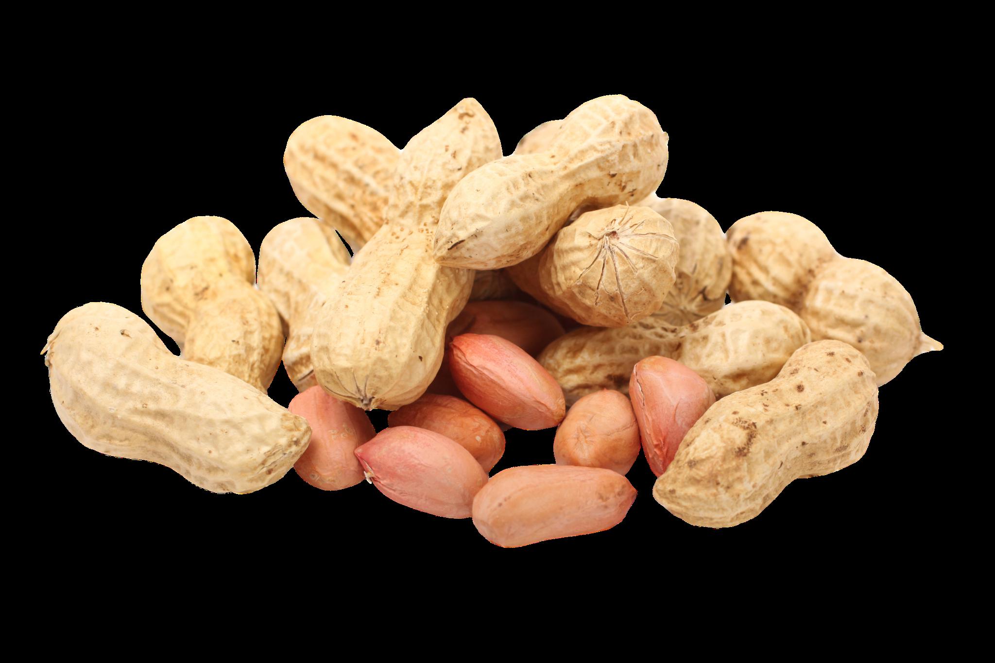 Carolina Black Peanut, 28 g : Southern Exposure Seed