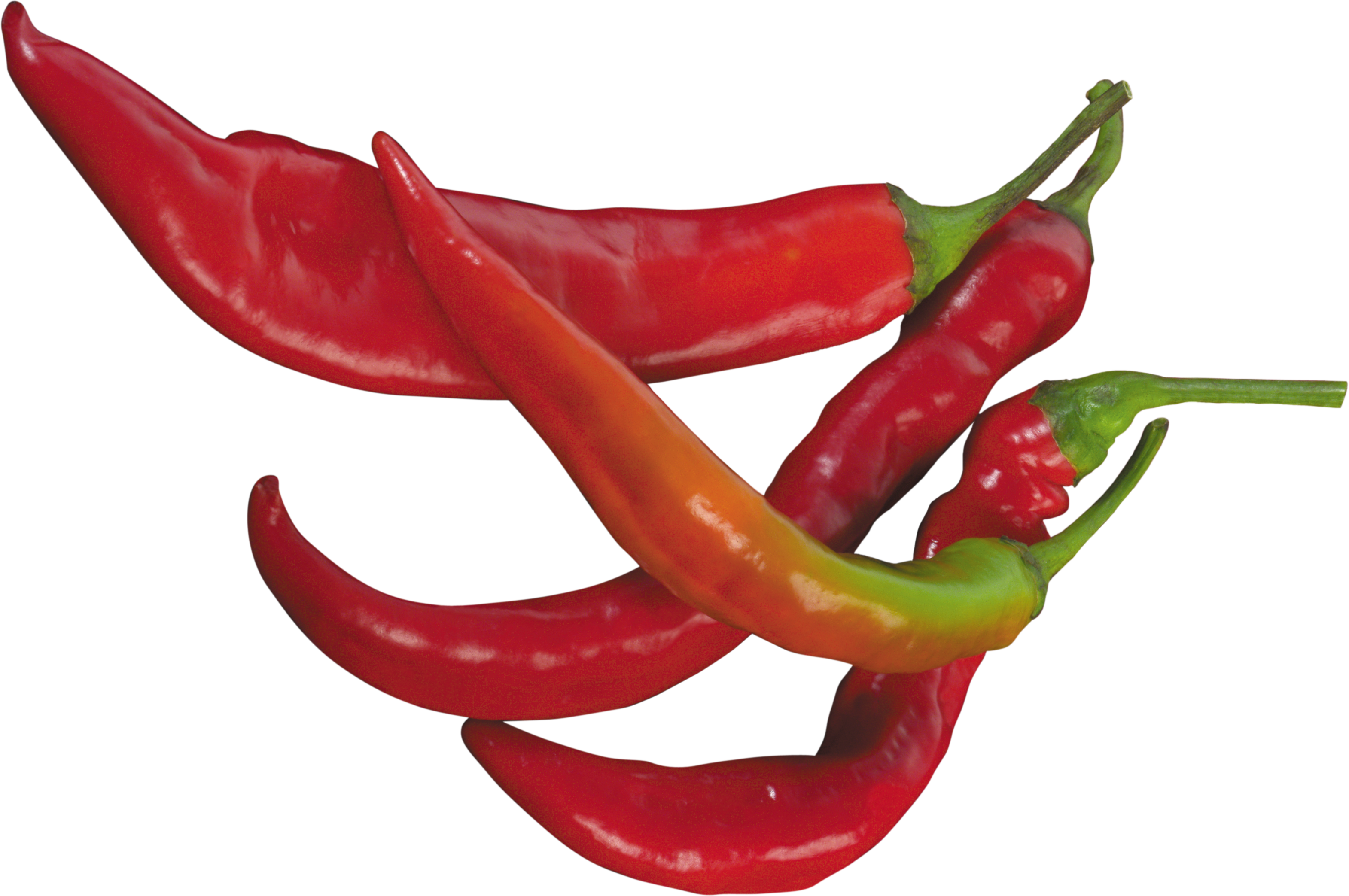 Red chili pepper PNG image