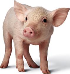 Sleazy wicked ribald pigs