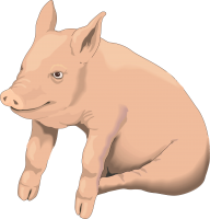 picture pig PNG image