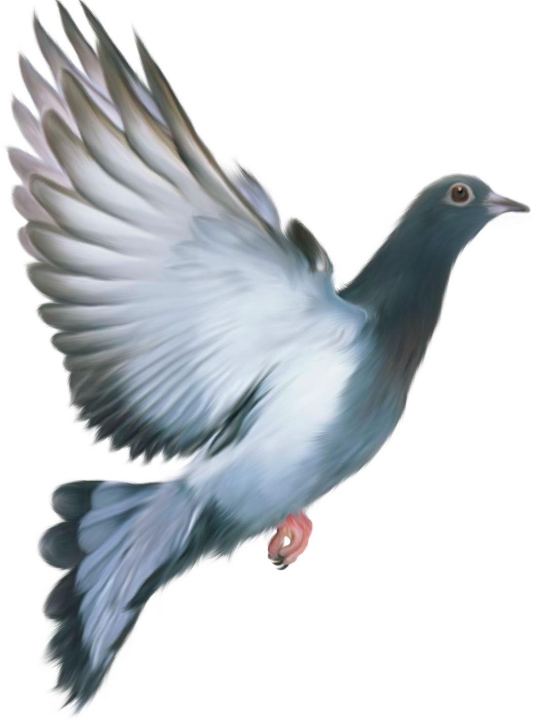 Pigeon PNG images, free pigeon png pictures download