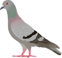 pigeon PNG image
