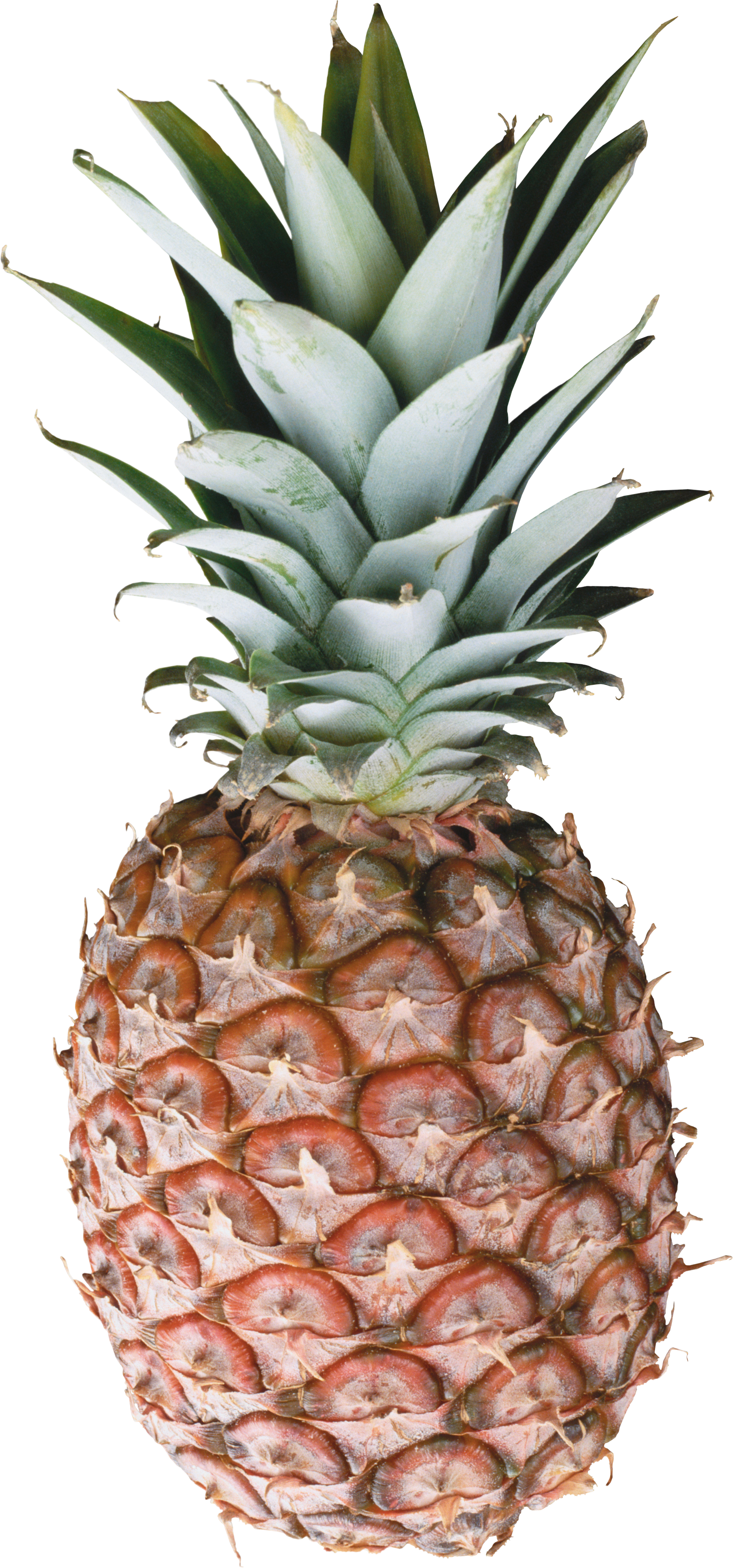 Pineapple PNG images free pictures download