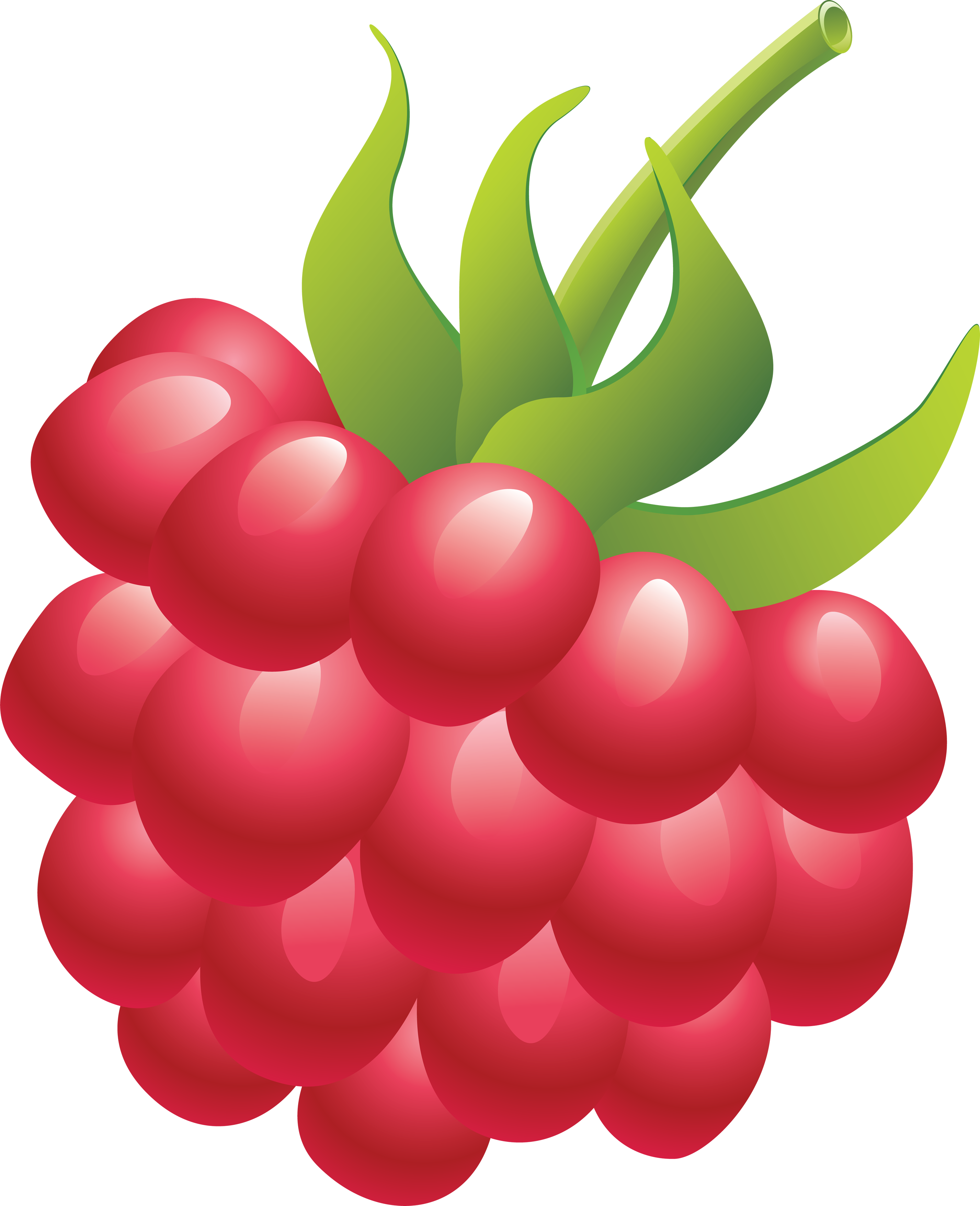 Rraspberry PNG image